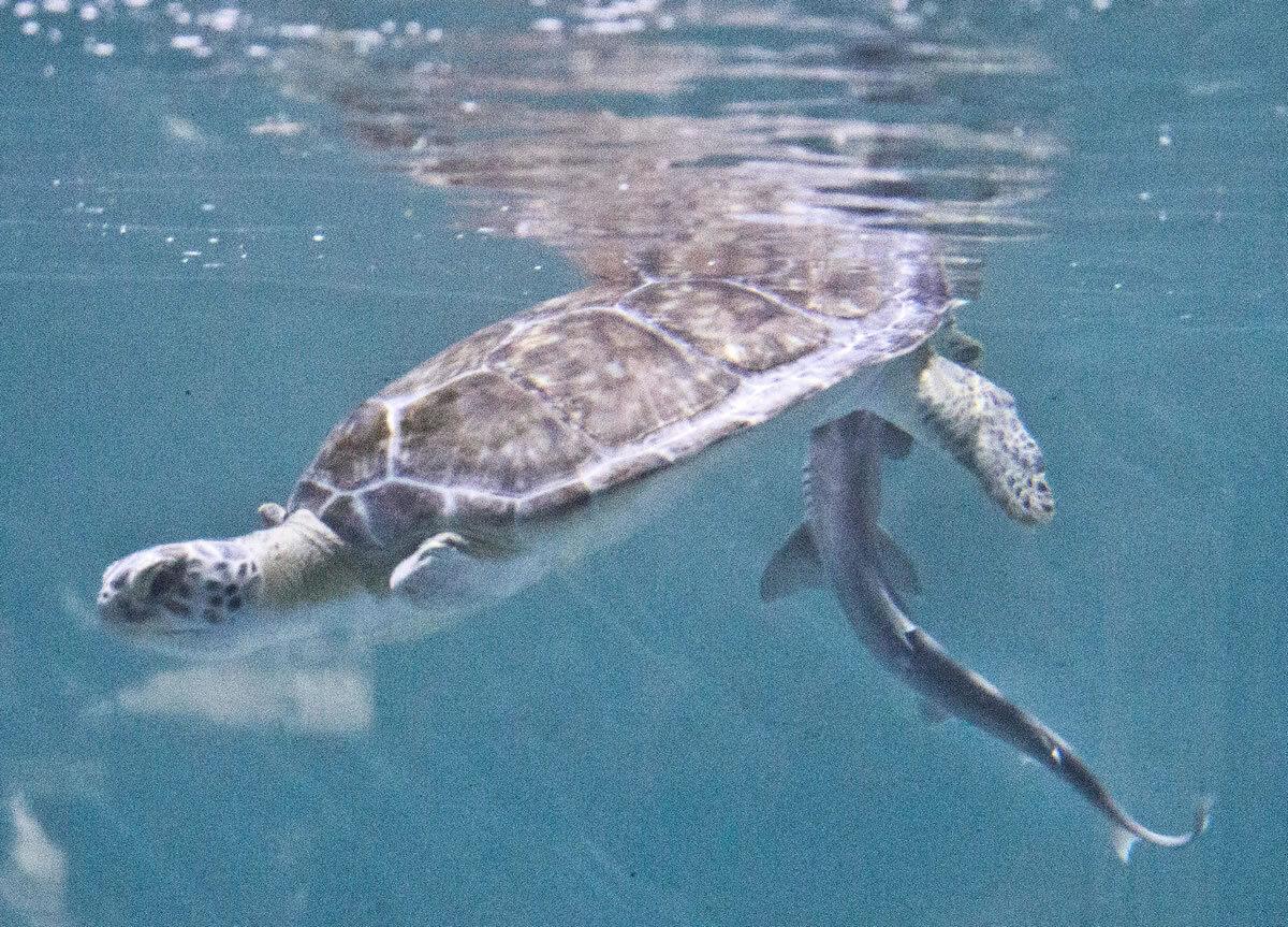 The Florida Aquarium<