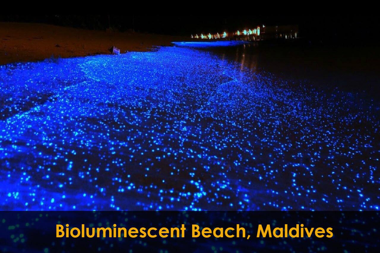 Bioluminescent Beach, Maldives